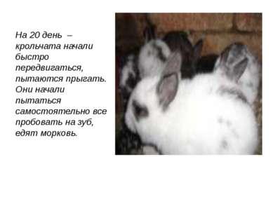 На 20 день – крольчата начали быстро передвигаться, пытаются прыгать. Они нач...