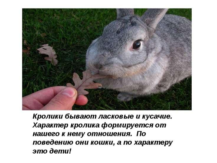 Кролики бывают ласковые и кусачие. Характер кролика формируется от нашего к...