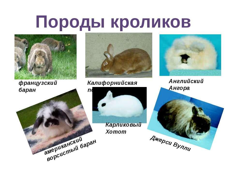 Породы кроликов Калифорнийская порода французский баран американский ворсисты...