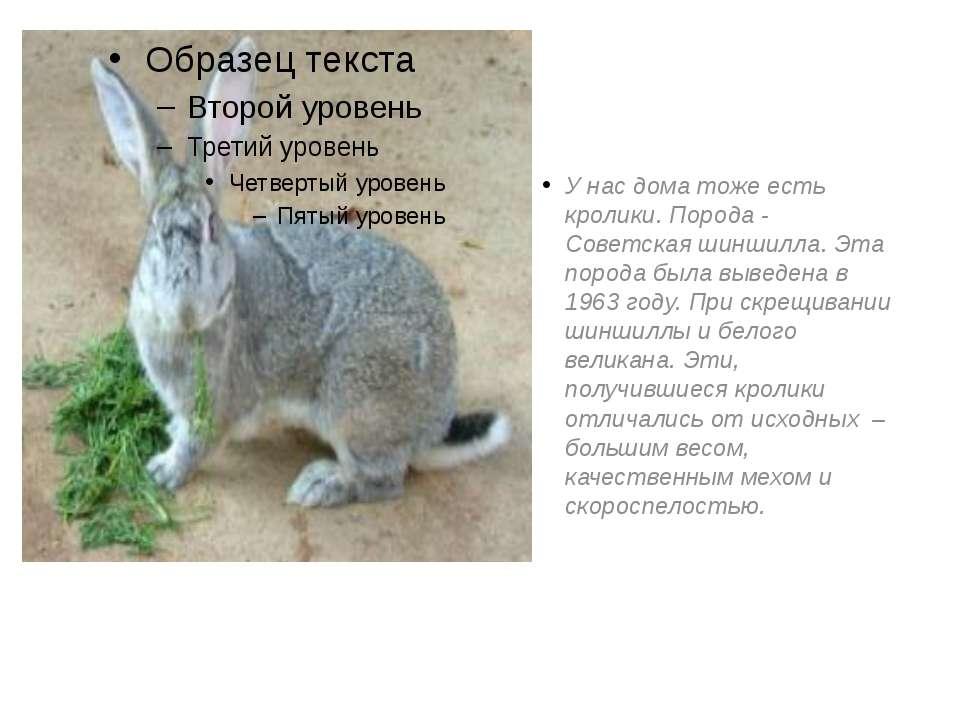 У нас дома тоже есть кролики. Порода - Советская шиншилла. Эта порода была вы...