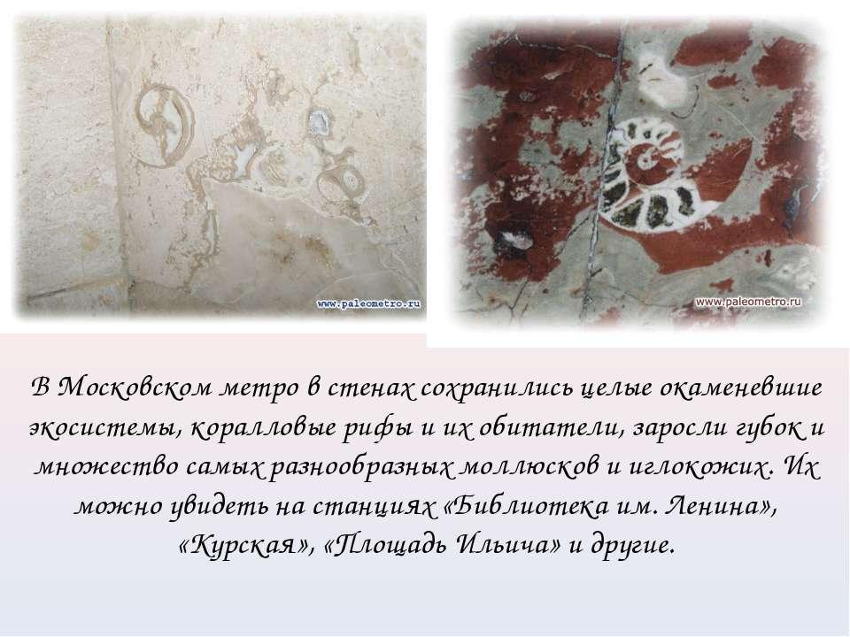В Московском метро в стенах сохранились целые окаменевшие экосистемы, коралло...