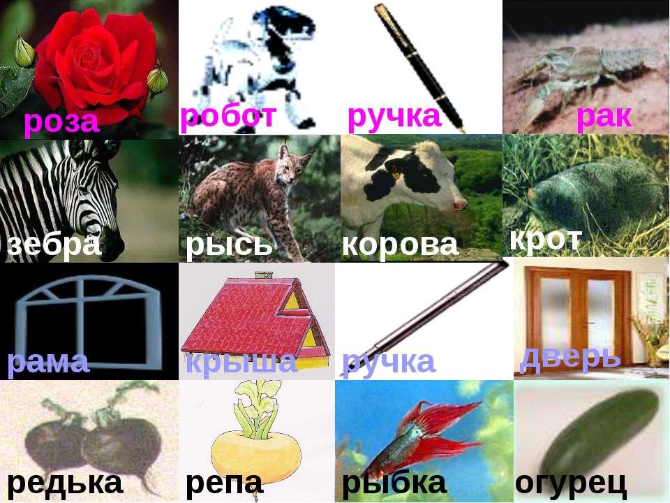 роза робот ручка рак зебра рысь корова крот рама крыша ручка дверь редька реп...