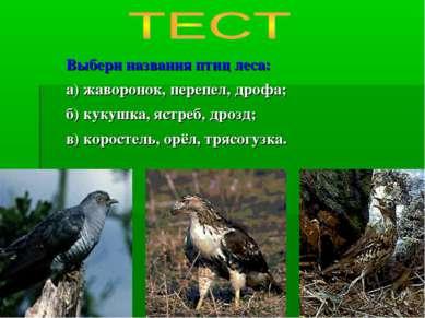 Выбери названия птиц леса: а) жаворонок, перепел, дрофа; б) кукушка, ястреб, ...