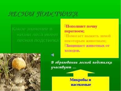 ЛЕСНАЯ ПОДСТИЛКА Какое значение в жизни леса имеет лесная подстилка? Пополняе...