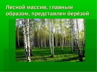 Лесной массив, главным образом, представлен берёзой