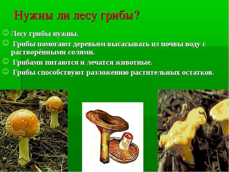 Нужны ли лесу грибы? Лесу грибы нужны. Грибы помогают деревьям высасывать из ...
