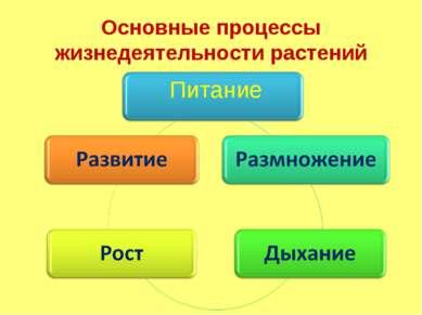Основные процессы жизнедеятельности растений Питание