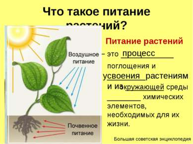 Что такое питание растений? Питание растений – это ___________ поглощения и _...