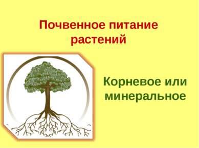 Почвенное питание растений Корневое или минеральное