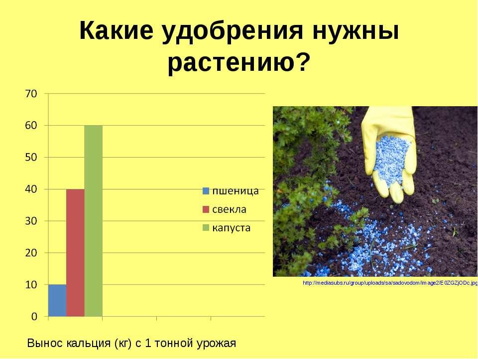 Какие удобрения нужны растению? http://mediasubs.ru/group/uploads/sa/sadovodo...