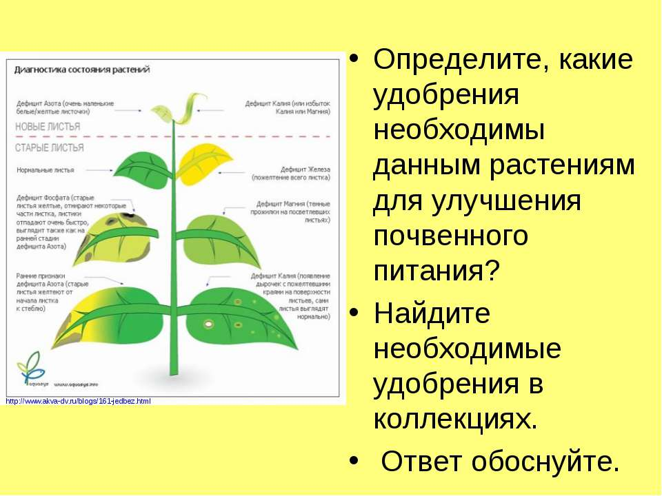 Определите, какие удобрения необходимы данным растениям для улучшения почвенн...