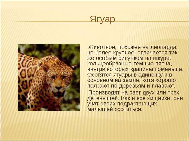 Ягуар Животное, похожее на леопарда, но более крупное; отличается так же особ...