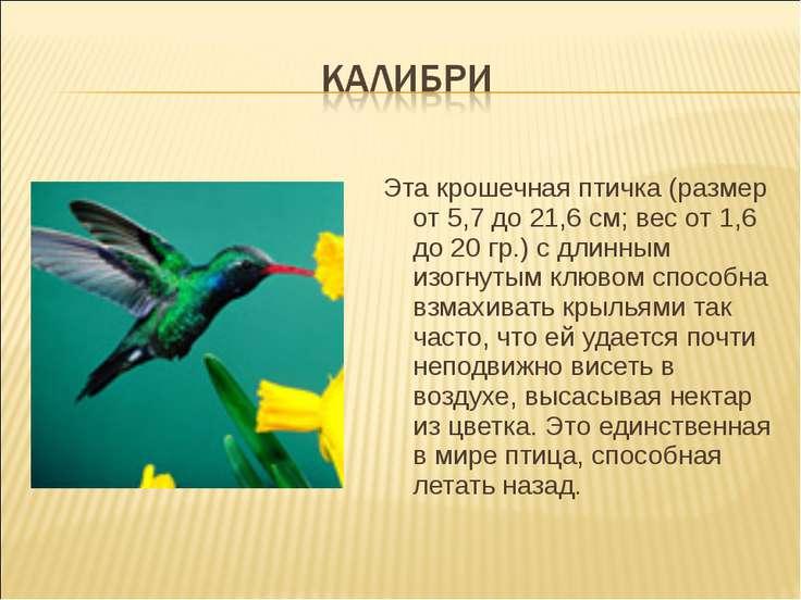 Эта крошечная птичка (размер от 5,7 до 21,6 см; вес от 1,6 до 20 гр.) с длинн...