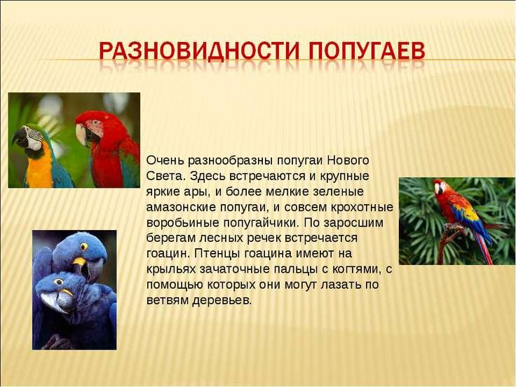 Очень разнообразны попугаи Нового Света. Здесь встречаются и крупные яркие ар...