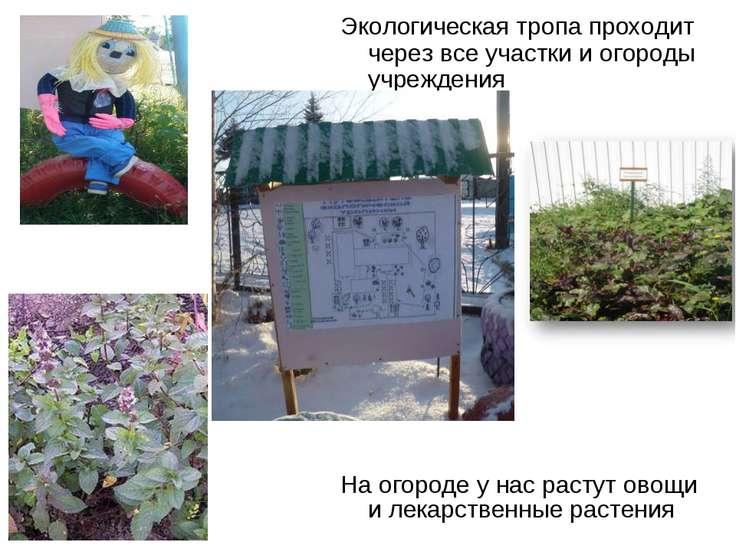 На огороде у нас растут овощи и лекарственные растения Экологическая тропа пр...