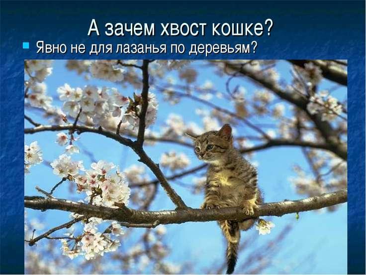 А зачем хвост кошке? Явно не для лазанья по деревьям?