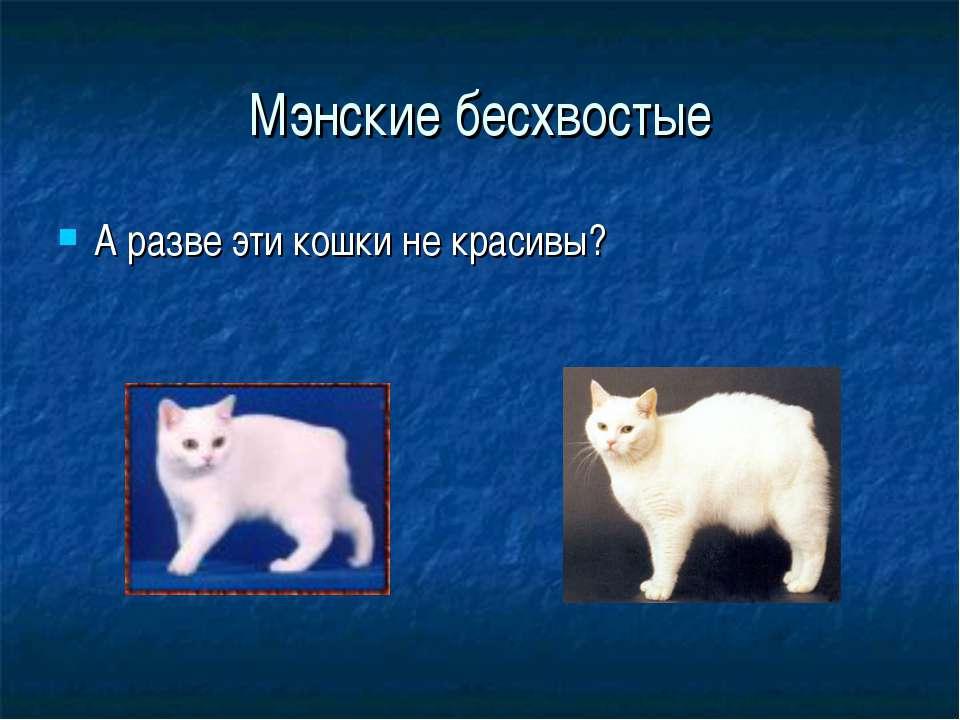 Мэнские бесхвостые А разве эти кошки не красивы?