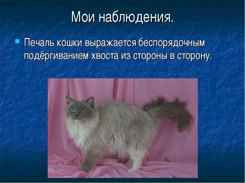 Мои наблюдения. Печаль кошки выражается беспорядочным подёргиванием хвоста из...