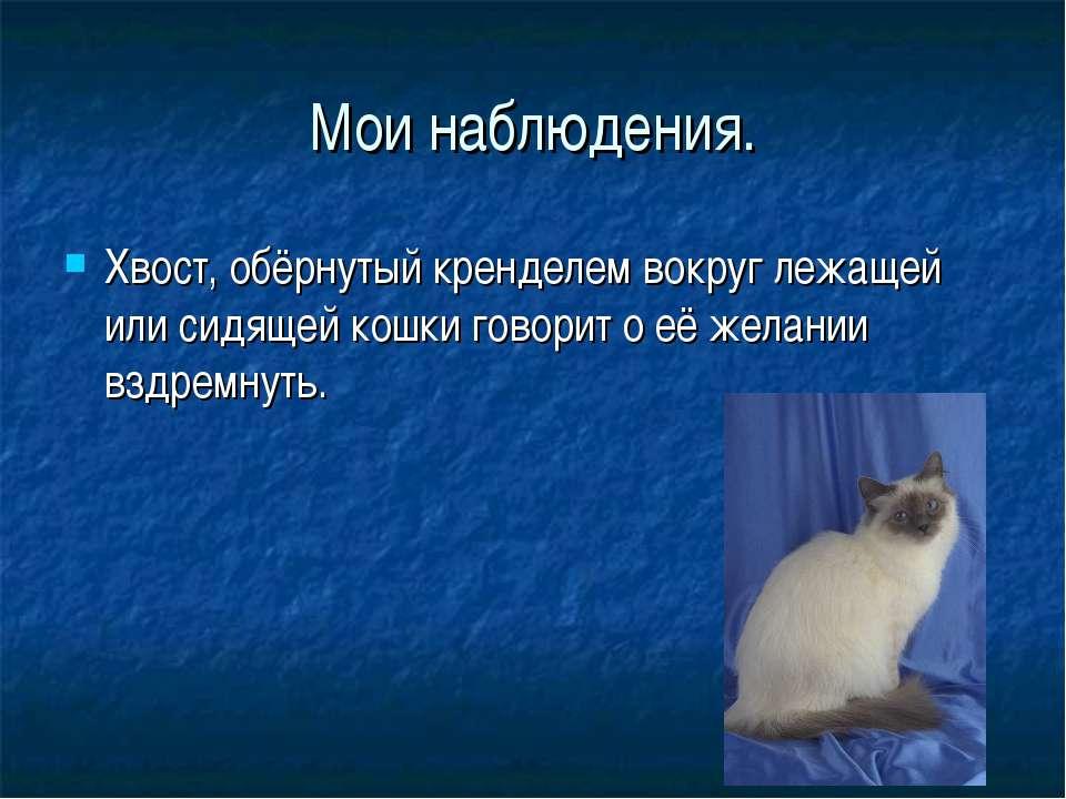 Мои наблюдения. Хвост, обёрнутый кренделем вокруг лежащей или сидящей кошки г...