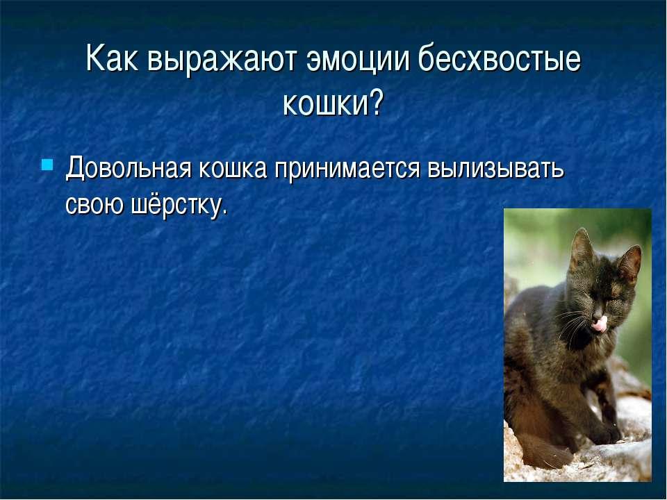 Как выражают эмоции бесхвостые кошки? Довольная кошка принимается вылизывать ...