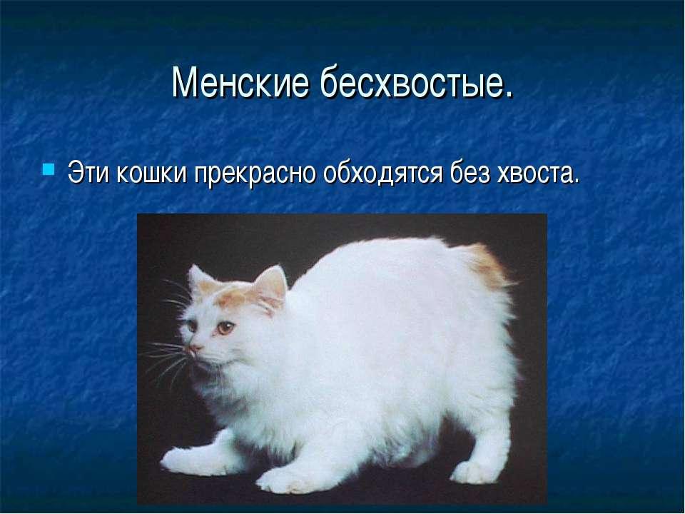 Менские бесхвостые. Эти кошки прекрасно обходятся без хвоста.