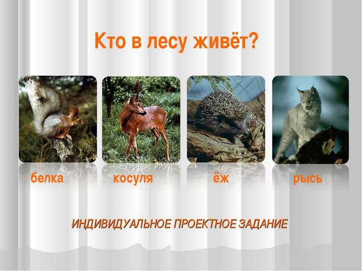 ИНДИВИДУАЛЬНОЕ ПРОЕКТНОЕ ЗАДАНИЕ белка косуля ёж рысь Кто в лесу живёт?