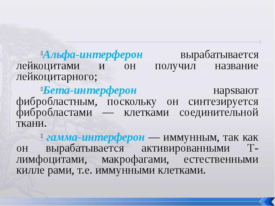 Альфа-интерферон вырабатывается лейкоцитами и он получил название лейкоцитарн...