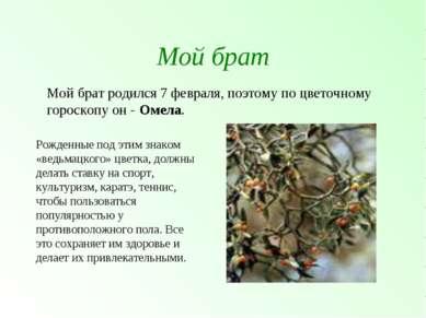 Мой брат Мой брат родился 7 февраля, поэтому по цветочному гороскопу он - Оме...
