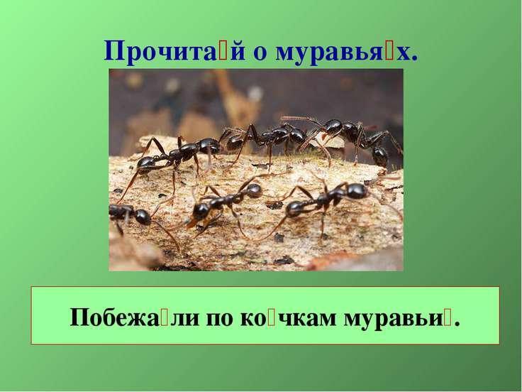 Прочита й о муравья х. Побежа ли по ко чкам муравьи .