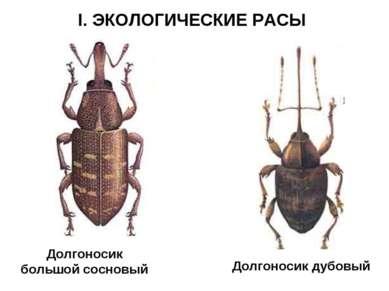 I. ЭКОЛОГИЧЕСКИЕ РАСЫ Долгоносик большой сосновый Долгоносик дубовый