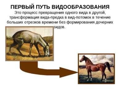 ПЕРВЫЙ ПУТЬ ВИДООБРАЗОВАНИЯ Это процесс превращения одного вида в другой, тра...