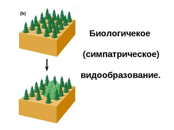 Биологичекое (симпатрическое) видообразование.