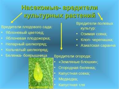 Насекомые- вредители культурных растений Вредители огорода: «Земляные блошки»...