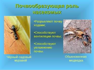 Почвообразующая роль насекомых Чёрный садовый муравей Обыкновенная медведка Р...
