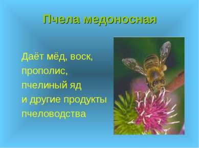 Пчела медоносная Даёт мёд, воск, прополис, пчелиный яд и другие продукты пчел...