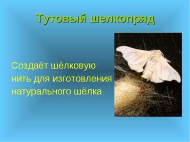 Тутовый шелкопряд Создаёт шёлковую нить для изготовления натурального шёлка