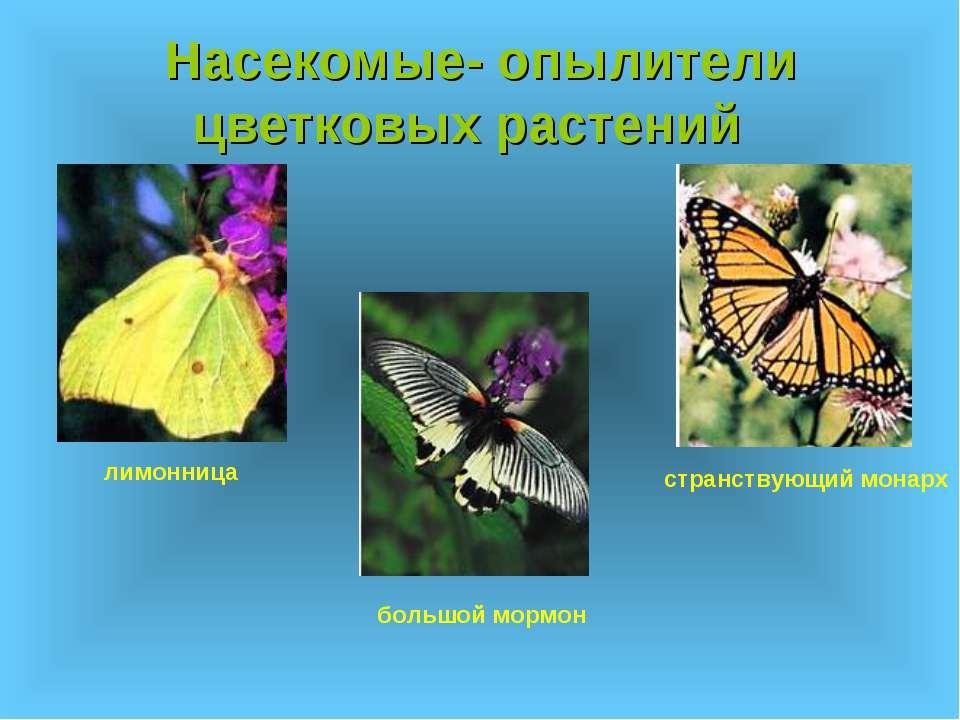 Насекомые- опылители цветковых растений большой мормон странствующий монарх л...