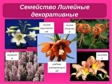 лилия тигровая лилия царственная рябчик императорский гиацинты лилейник Семей...