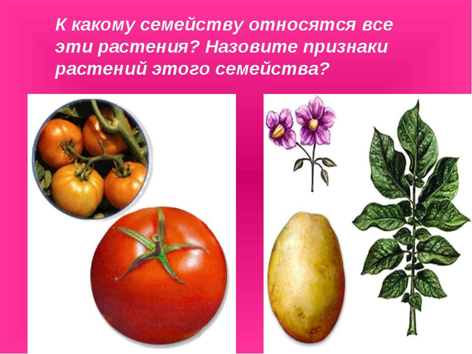 К какому семейству относятся все эти растения? Назовите признаки растений это...