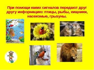 При помощи каких сигналов передают друг другу информацию: птицы, рыбы, хищник...