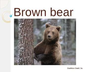 Brown bear Dashkov Danil, 3a