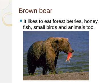 Brown bear It likes to eat forest berries, honey, fish, small birds and anima...
