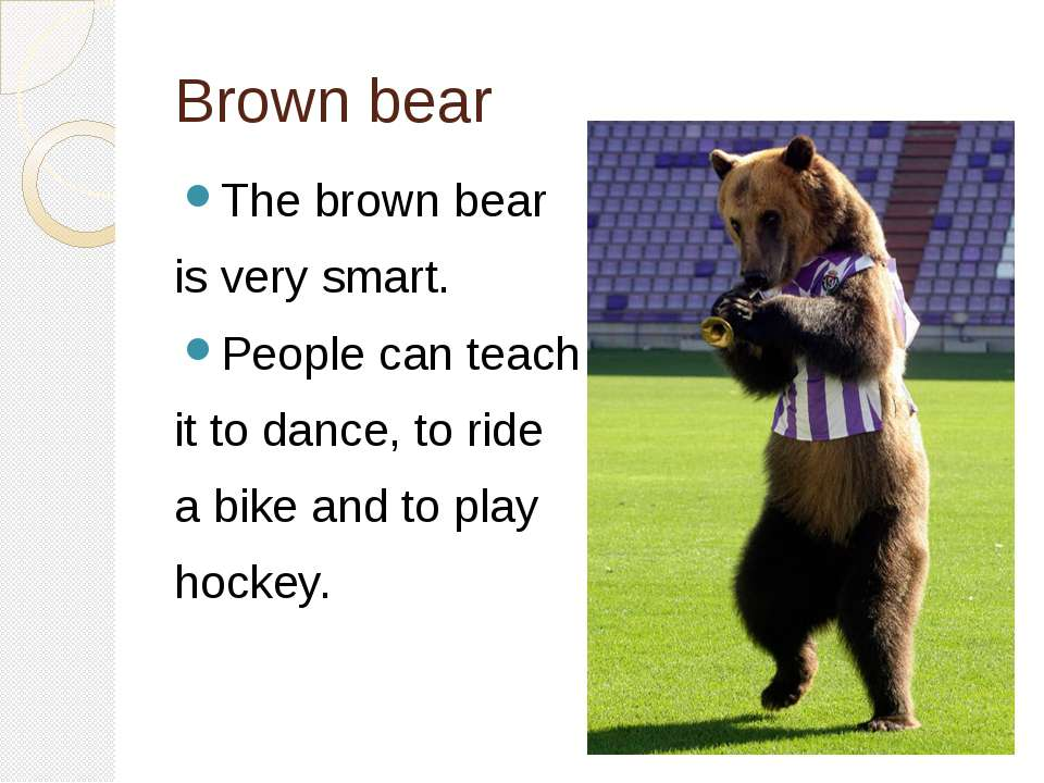Brown bear The brown bear is very smart. People can teach it to dance, to rid...