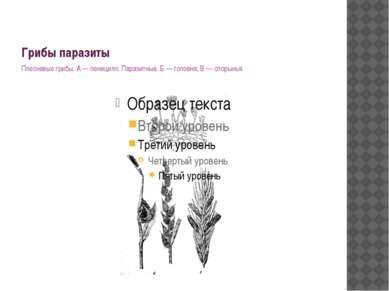 Грибы паразиты Плесневые грибы. А — пеницилл. Паразитные: Б — головня; В — сп...