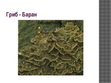 Гриб - Баран