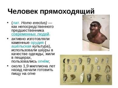 Человек прямоходящий (лат.Homo erectus) —как непосредственного предшественни...