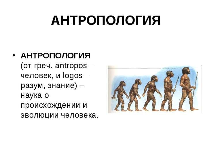 АНТРОПОЛОГИЯ АНТРОПОЛОГИЯ (от греч. antropos – человек, и logos – разум, знан...
