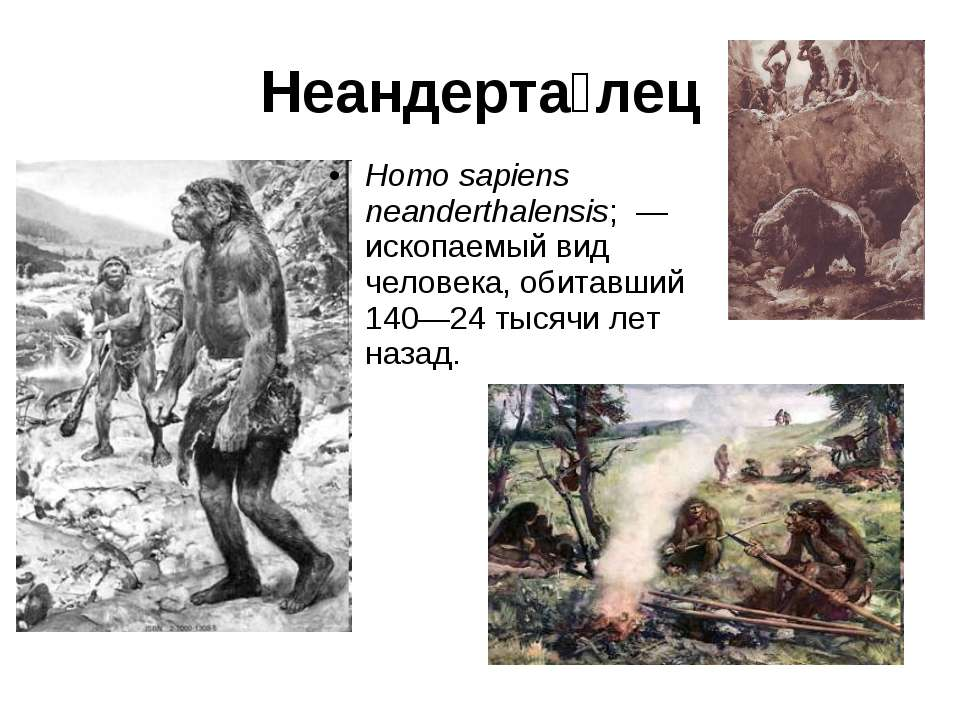 Неандерта лец Homo sapiens neanderthalensis; — ископаемый вид человека, обит...