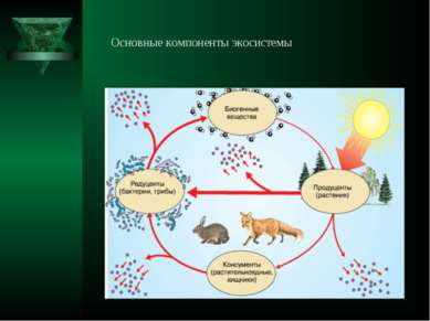 Основные компоненты экосистемы