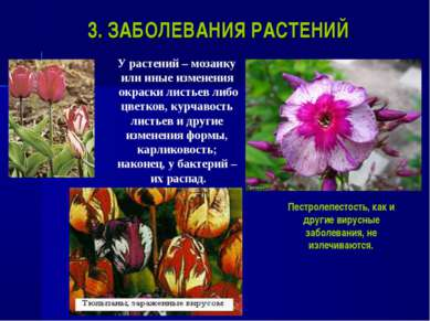 3. ЗАБОЛЕВАНИЯ РАСТЕНИЙ У растений – мозаику или иные изменения окраски листь...